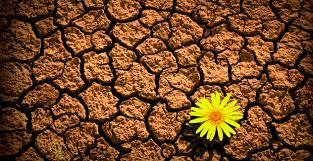 10 consigli per abbassare lo stress e costruire la tua resilienza emotiva