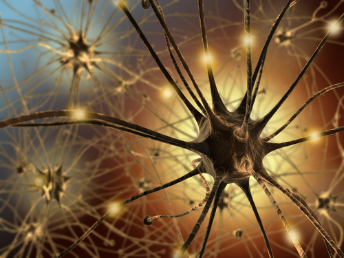 plasticità del cervello