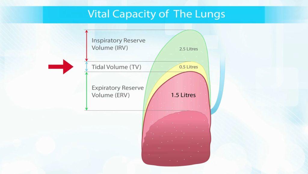 capacita-vitale-dei-polmoni