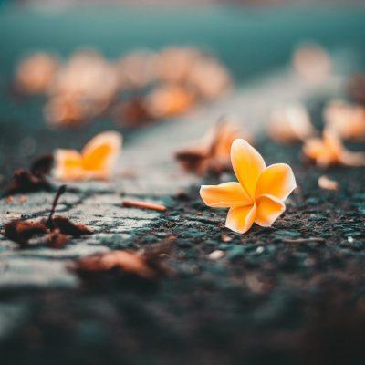 Frasi e aforismi sulla resilienza