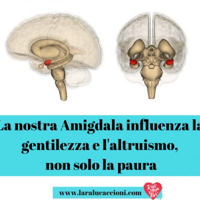 La nostra Amigdala influenza la gentilezza e l'altruismo, non solo la paura