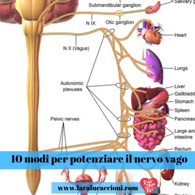 10 modi per potenziare il nervo vago